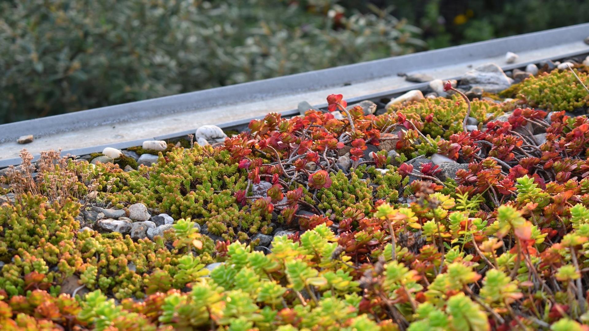 Planten op een groen dak
